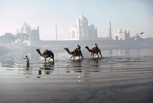 « Le Taj Mahal vu de dos depuis la rive de la Yamuna, tandis que trois dromadaires traversent à gué la rivière un matin d'hiver. » Roland et Sabrina Michaud
